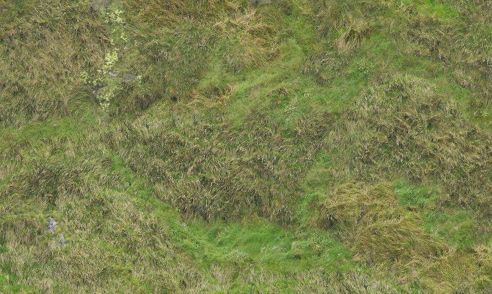 Grassland 6 X4 Game Mat